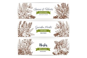 Herbs and spices organic plant sketch banner set