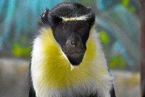 Cute Primate Posing