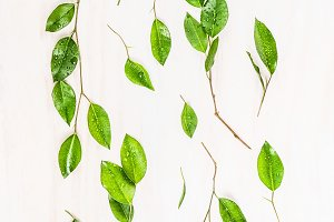 Green leaves branch flat lay
