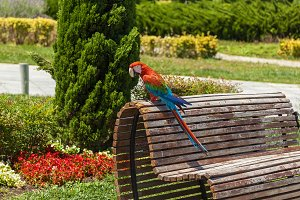 Parrot ara sitting on the bench.