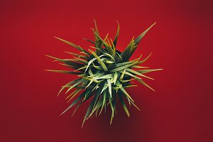 Green Plastic Plant On Red Background, Flat Lay. Creative Concept
