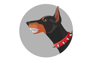 Angry doberman with open mouth and red collar