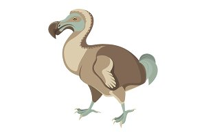 Big exotic dodo bird with short wings and fluffy tail