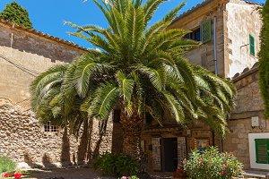 palm tree near a stone house