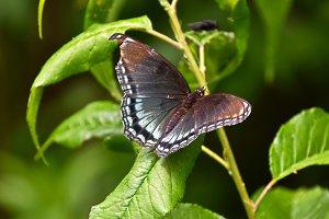 Butterfly Broken Wing