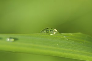 Drop of dew on the grass