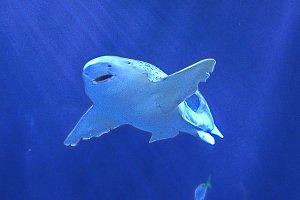Shark Over Me