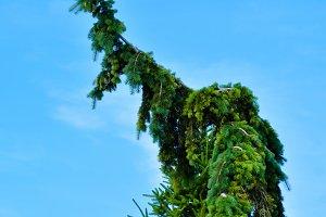 Profanity Tree