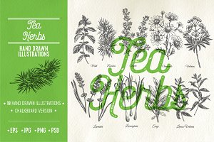 Hand drawn tea herbs illustrations