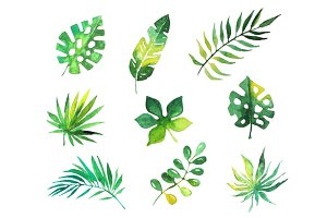 Tropical leaves set, jungle trees, botanical watercolor vector Illustrations