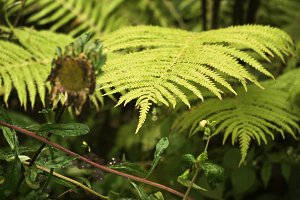 Green ferns in the forest.