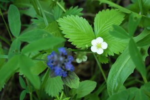 Flower and strawberry leaf