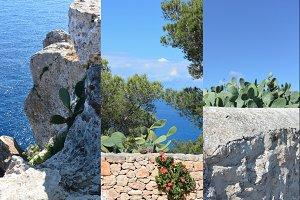Cactus on Formentera