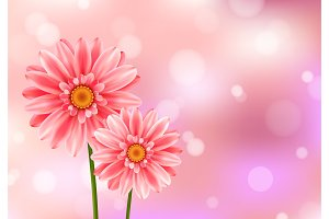 Gerbera flower on bright pink background.
