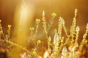 beautiful spring wild beadow plants