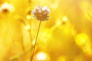 spring meadow wild flower in green g