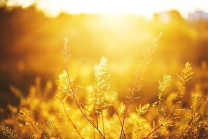 plants in field en eveing fresh oran