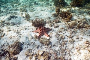 Starfish on coral.