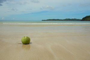 Green coconut on the sand beach.