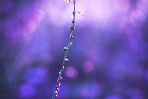 wild meadow white little spring flow