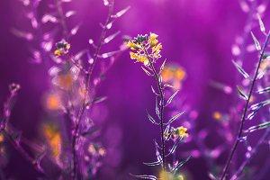 little yellow wild meadow beautiful