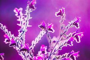 little pink wild meadow beautiful sp