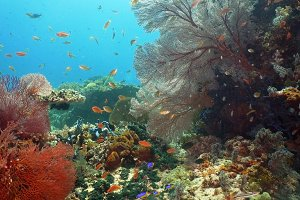 Coral reef and tropical fish.Philippines