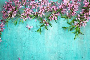 Border of flowering almonds on turquoise background. Springtime concept