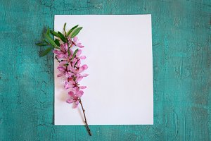 empty sheet of paper and twig of flowering almonds on turquoise background