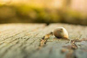 wooden boards pine snail shell