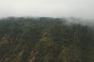 Rainforest in the fog and clouds. Bali, Indonesia.