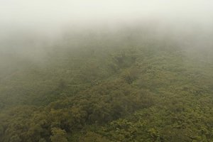 Rainforest in the fog. Jawa island, Indonesia. Stock Footage