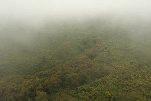 Rainforest in the fog. Jawa island, Indonesia. Stock Footage