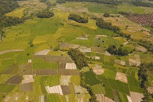 Landscape with farmlands and rice terrace field Bali, Indonesia.
