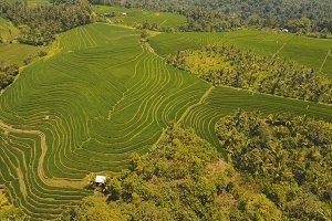 Terrace rice fields, Bali,Indonesia.