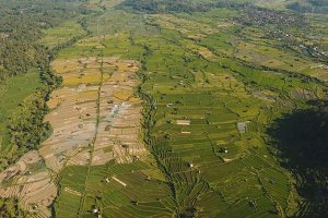 Landscape with rice terrace field Bali, Indonesia