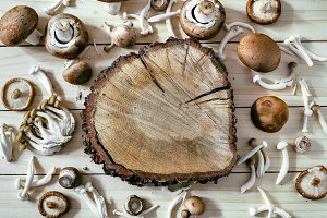 Different kinds of edible mushrooms