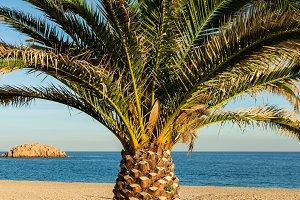 Palm in a empty beach