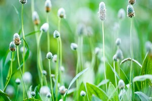 Nature. Bright meadow green plants i