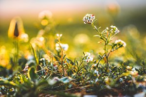Nature. Beautiful meadow wild spring