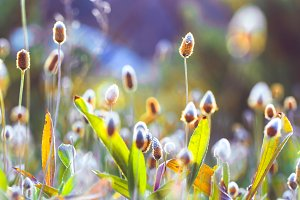 Spring flowers. Nature background in