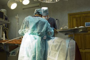 Surgical operation of a dog in a veterinary clinic