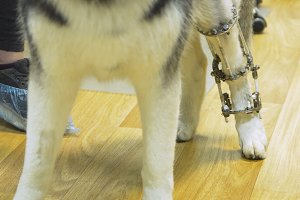 Dog with a broken paw in a veterinary clinic.