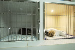Dog and cat in cage after surgery