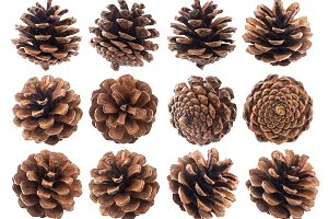 Pine cones isolated on white background closeup