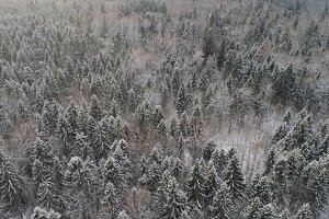 Winter landscape with forest.