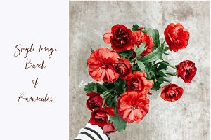 Red Flowers Styled Stock Image