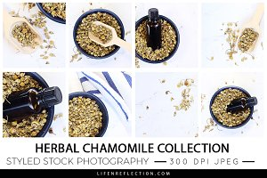 Herbal Chamomile Stock Photography