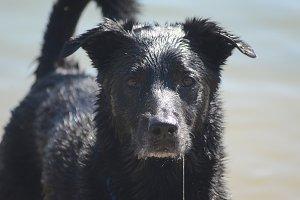 Wet Faced Dog