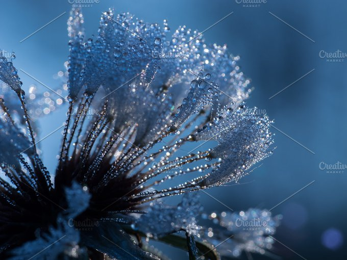 Blue background drops.jpg - Nature